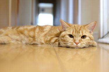 X100Fで猫を撮ってみたら最強のキャットスナッパーだった